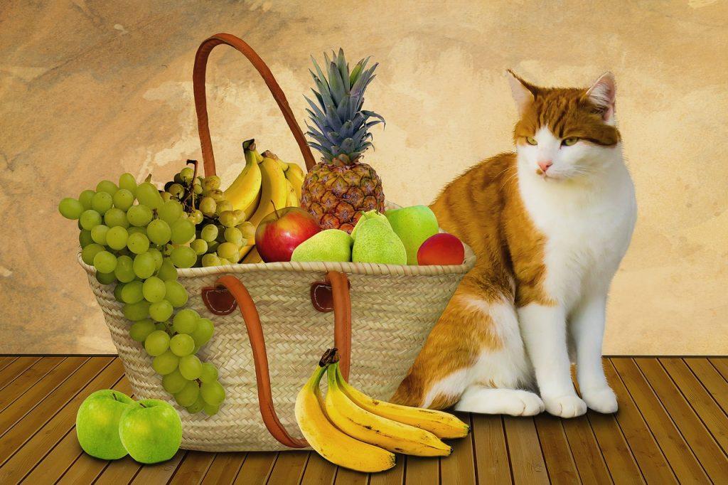 Can cats eat bananas ?